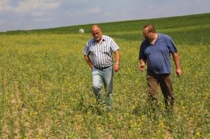 Feld mit Bienenweide- Begehung mit Landwirt D. Wolf