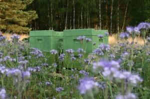 Bienenbeuten am Waldrand